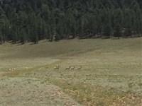 Spinney Mountain Reservoir Escape : Hartsel : Park County : Colorado
