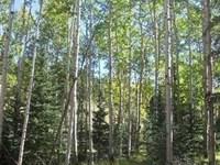 Colorado Woodland Estates : Florissant : Teller County : Colorado