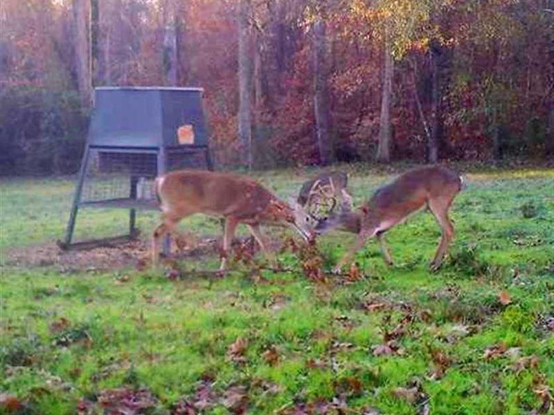 Incredible Hunting/Recreational Pr : Reklaw : Rusk County : Texas