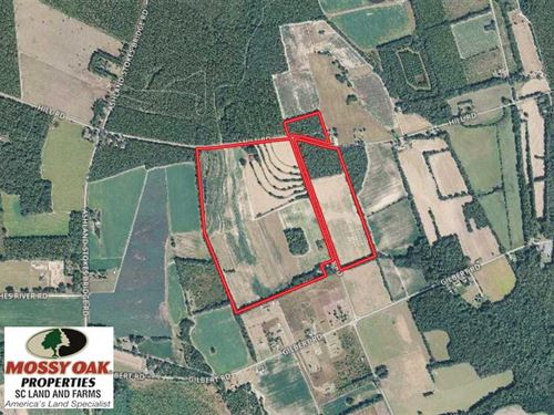140.2 Acres Farm And Timber Land : Bishopville : Lee County : South Carolina