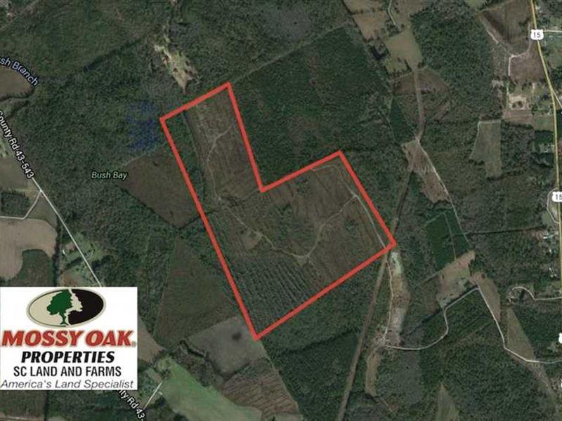 Reduced, 174 Acres of Hunting Lan : Sumter : Sumter County : South Carolina