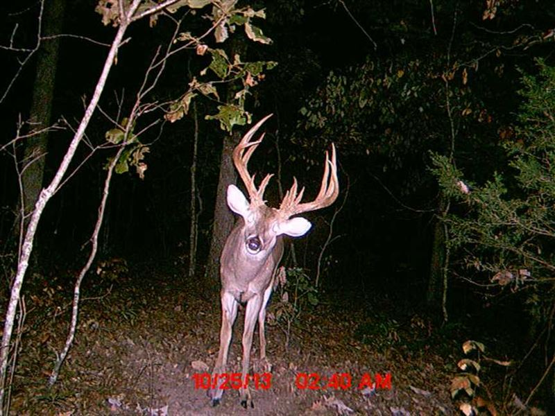 Big Buck Paradise - 250 Acres : Crocker : Pulaski County : Missouri