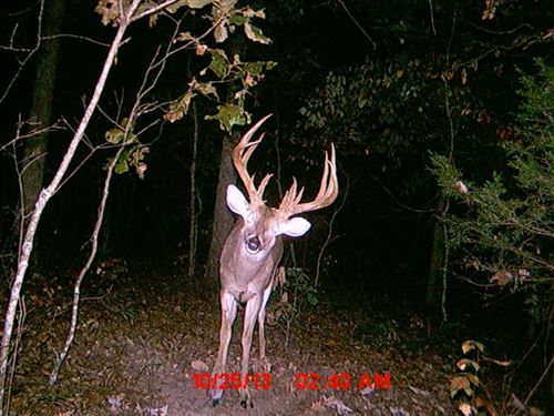 Big Buck Paradise - 250 Acres : Crocker : Pulaski County : Missouri