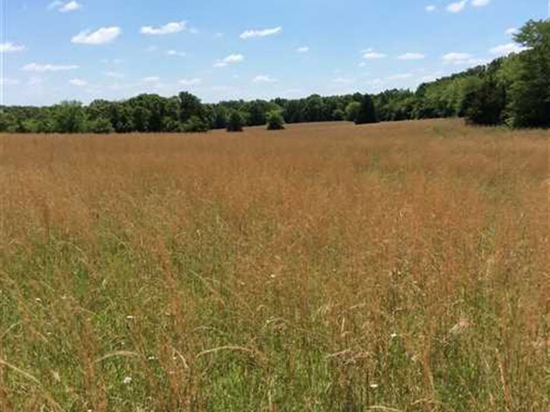 92 Acres Close to Lake of The Ozar : Camdenton : Camden County : Missouri