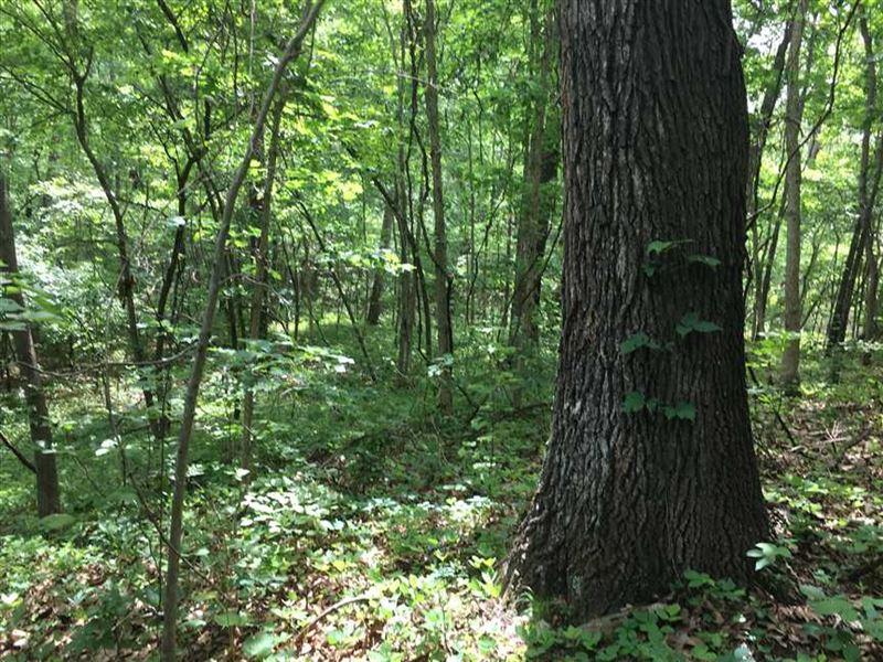 36 Acre Recreation/Build Site : Richland : Pulaski County : Missouri