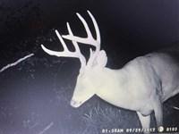 318 Acre Timberland : Lincoln : Benton County : Missouri