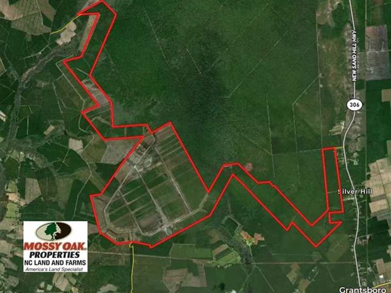 Reduced, 4000 Acres of Timber Lan : Grantsboro : Pamlico County : North Carolina