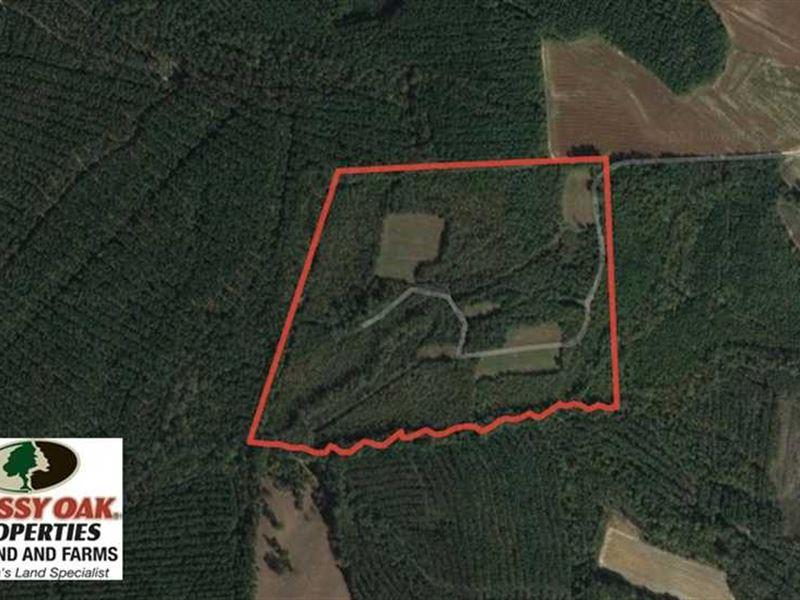 60 Acres of Farm And Timber Land : Halifax : Halifax County : North Carolina