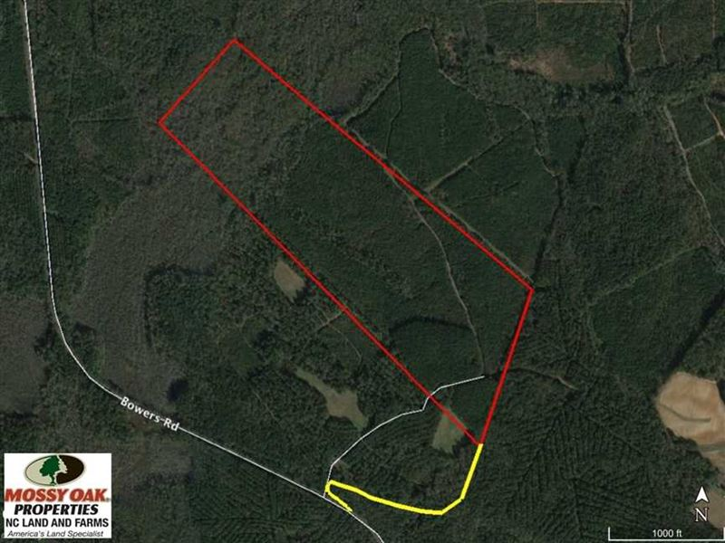 Reduced, 94 Acres of Prime Timber : Littleton : Halifax County : North Carolina