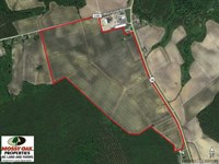 144 Acres of Prime Farm And Cropl : Trenton : Jones County : North Carolina