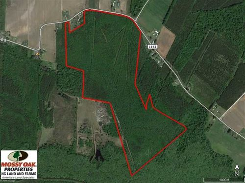 Reduced, 117 Acres of Hunting Lan : Creswell : Washington County : North Carolina