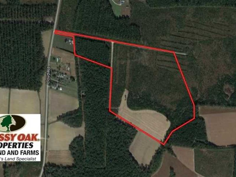 Pending, 57.3 Acres of Timber And : Lucama : Wilson County : North Carolina