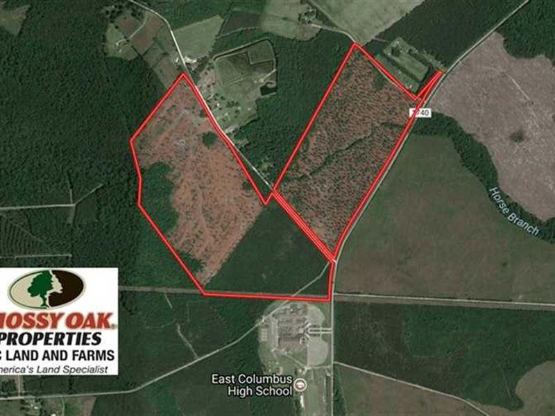 202.2 Acres of Hunting And Timber : Lake Waccamaw : Columbus County : North Carolina