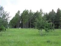 16.73 Acres in Hartsfield, GA : Hartsfield : Colquitt County : Georgia