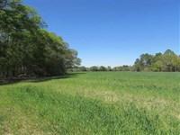 Airline Road Farm : Pavo : Thomas County : Georgia
