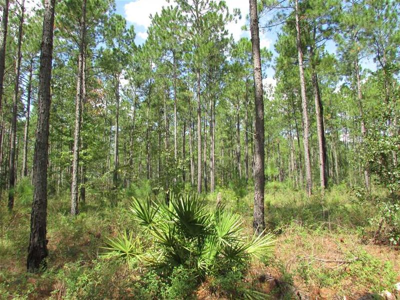 64 Acre Hunting or Private Homesit : Moultrie : Colquitt County : Georgia