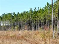 150 Acres For Sale in Wilcox Count : Abbeville : Wilcox County : Georgia