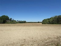 Danforth Farm Tract : Enigma : Berrien County : Georgia