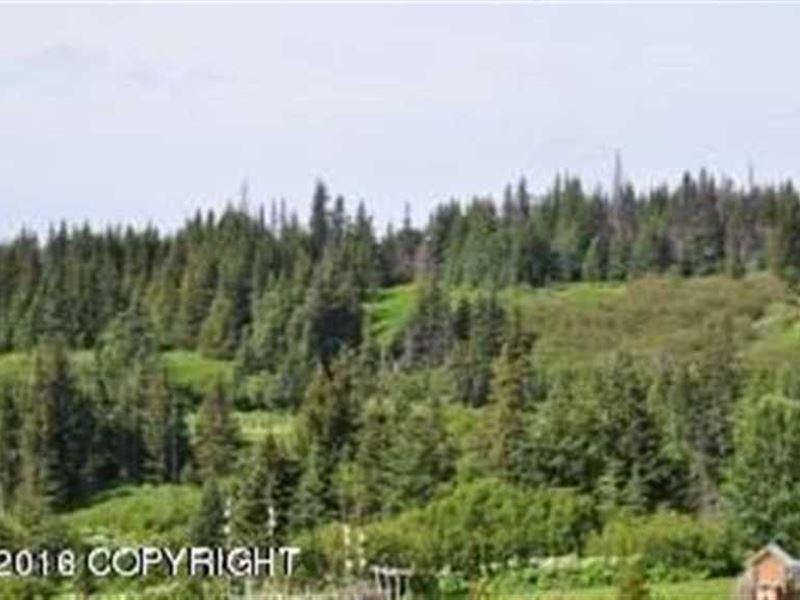Heaven On Earth 9 Acres in Anchor : Anchor Point : Kenai Peninsula Borough : Alaska