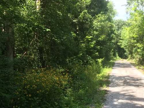 Secluded 36 Acre Tract on Clyde Fo : Culleoka : Maury County : Tennessee
