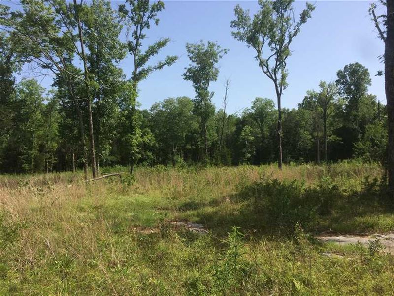 49 Secluded Acres in Chapel Hill : Chapel Hill : Marshall County : Tennessee