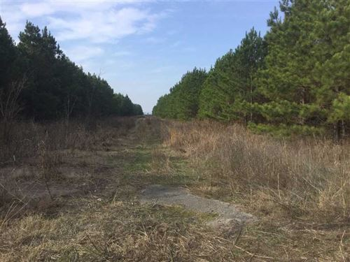 Jackson County Good Hunting 95 Acr : Newport : Jackson County : Arkansas