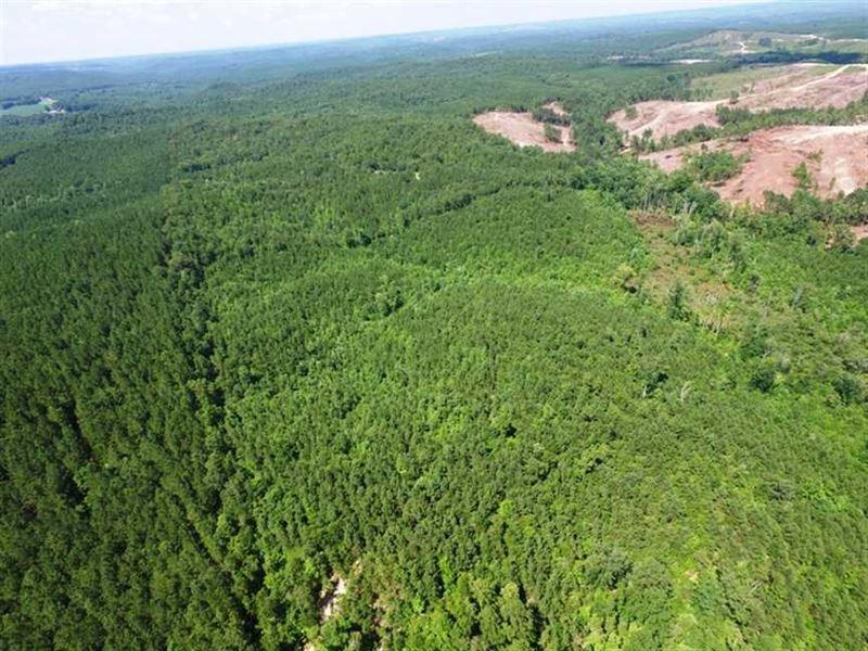 Marion County, AL 160 Acres : Hamilton : Marion County : Alabama