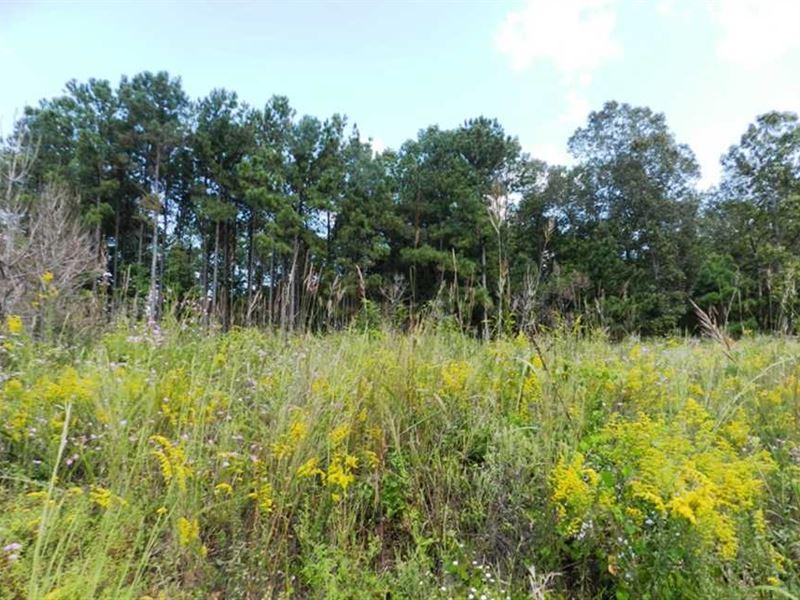 Millport Farm : Millport : Lamar County : Alabama