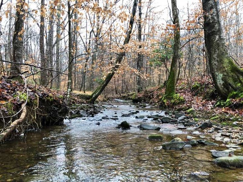 220 Acre Abundance of Deer And Tur : Russellville : Franklin County : Alabama