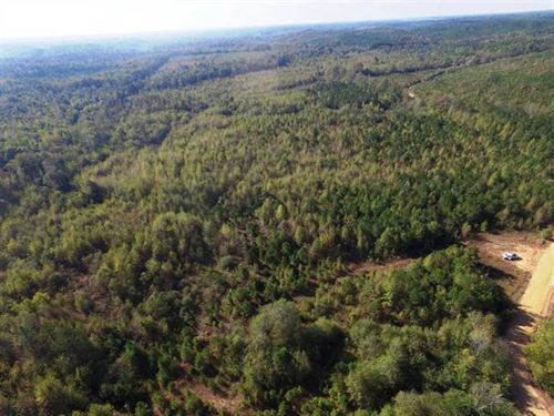 227 Acres Bottomland on Splung : Smithville : Monroe County : Mississippi