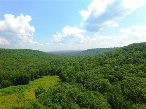 Hipps Creek Hardwood Timber And Pa : Muscle Shoals : Colbert County : Alabama