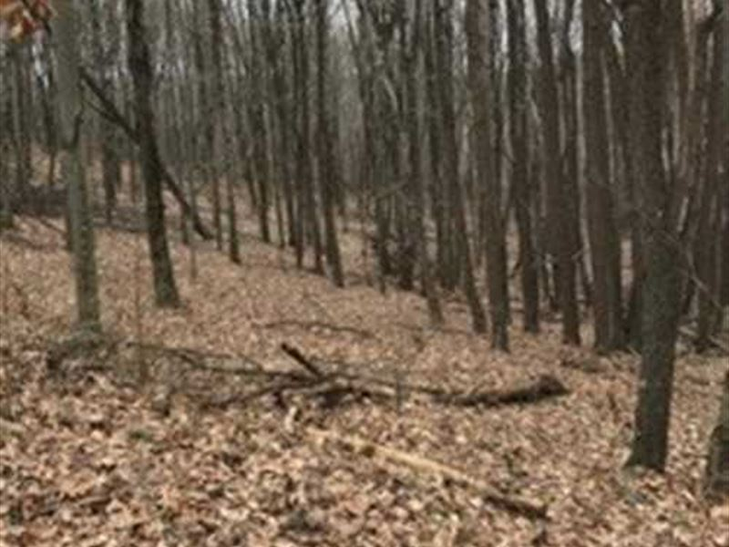 Cream Ridge Rd - 40 Acres - Columb : Lisbon : Columbiana County : Ohio