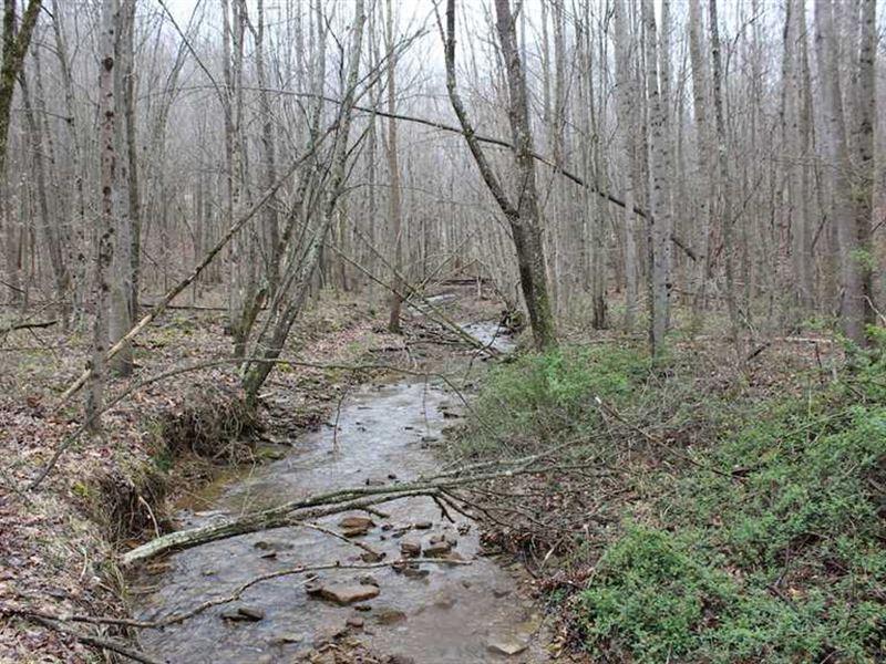Camp Creek Rd - 24 Acres - Pike Co : Piketon : Pike County : Ohio