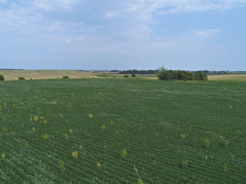 Kearney County Dryland : Minden : Kearney County : Nebraska