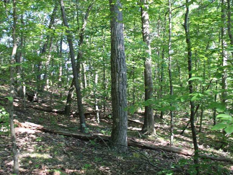 Whipoorwill Ridge Rd - 74 Acres : Dexter City : Noble County : Ohio
