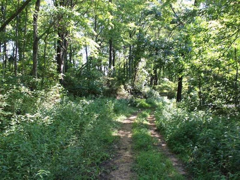 Danas Run Rd - 70 Acres : Newport : Washington County : Ohio