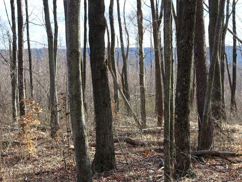 White Oak - 59 Acres - Pike County : Piketon : Pike County : Ohio