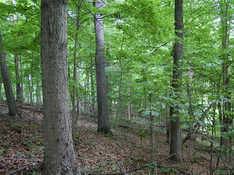 SR 7 - 74 Acres - Gallia County : Gallipolis : Gallia County : Ohio