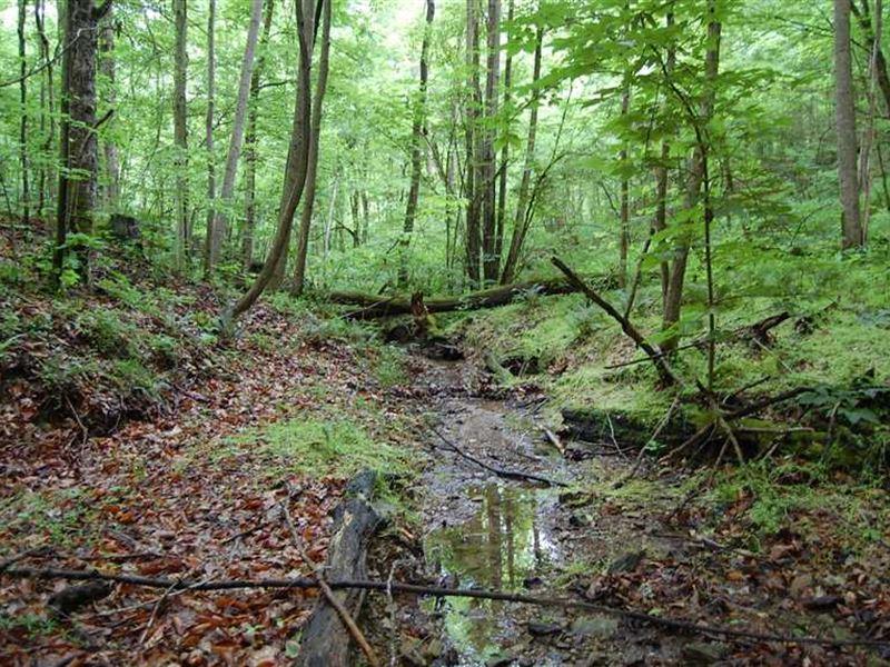 Marabel Rd - 33 Acres - Gallia Cou : Crown City : Gallia County : Ohio