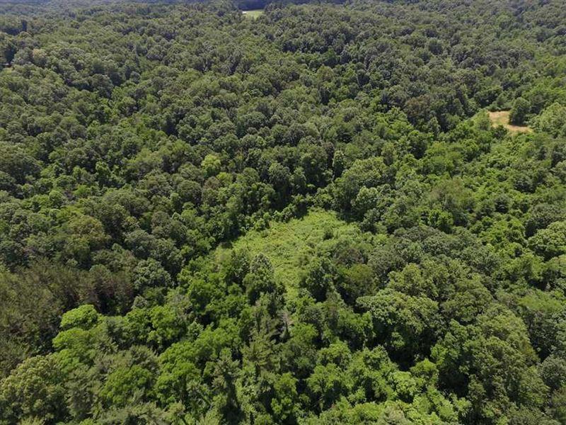 Coon Ridge Rd - 40 Acres - Musking : Chandlersville : Muskingum County : Ohio