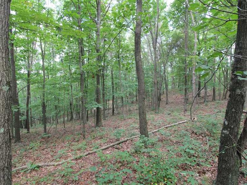 Plainfield Rd - 10 Acres - Musking : New Concord : Muskingum County : Ohio