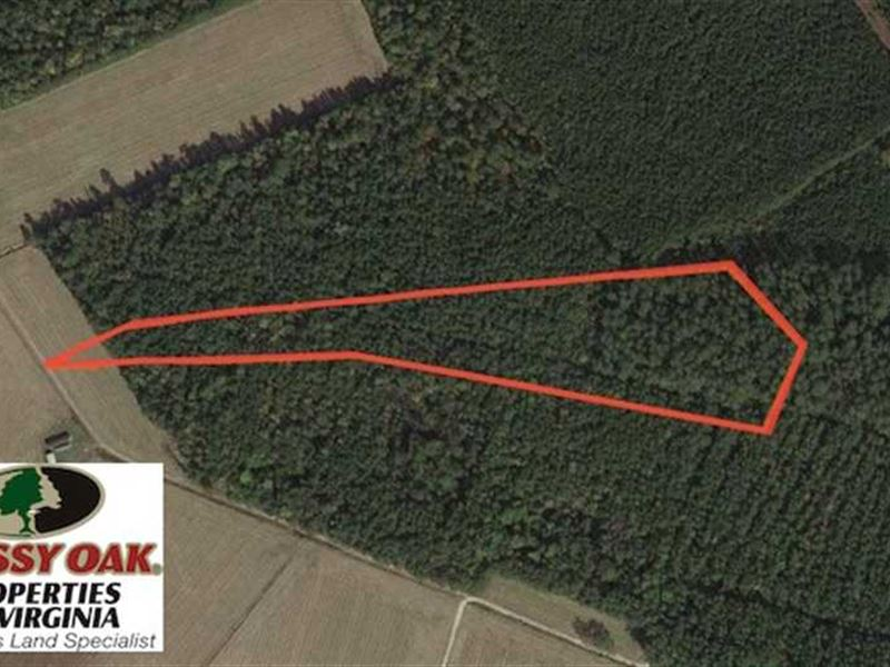 Under Contract, 8.38 Acres Timber : Suffolk : Suffolk County : Virginia