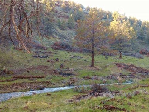 320 Acres Land Near Timber Basin : Dayville : Grant County : Oregon