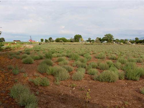 Western Colorado Acreage With View : Orchard City : Delta County : Colorado
