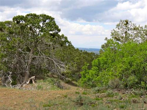 40-Acre Hunting Property With Acce : Crawford : Montrose County : Colorado