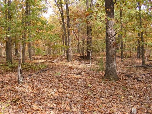 New Pictures Added, 5 Acres Re : Yellville : Marion County : Arkansas