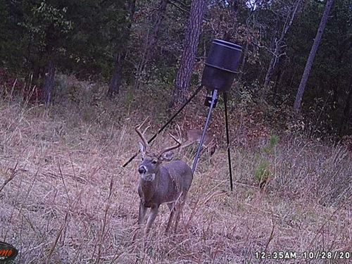 New Wildlife Pics Added, 163.6 : Mountain Home : Baxter County : Arkansas