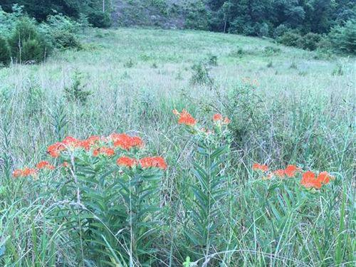 Year Round Water And 40 Acres : Dixon : Pulaski County : Missouri