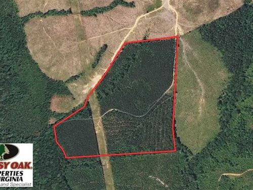 50 Acres of Timber And Recreationa : Halifax : Virginia