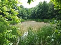 Skorich Farm 35 Acres Vermillion : Clinton : Vermillion County : Indiana